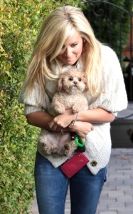 Ashley Tisdale picture as she stops by Coffee Bean and Tea Leaf with her cute puppy on December 13th 2009 around Beverly Hills 1