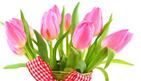 florists shops in amman