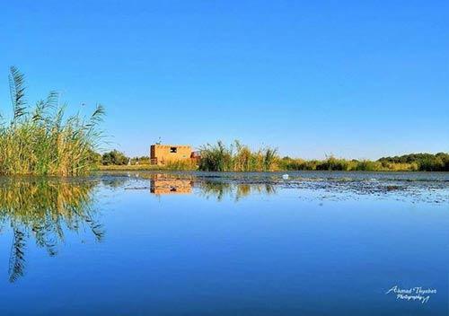 Azraq Wetland Reserve photo
