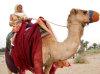 Paris Hilton riding a camel