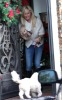 Ashley Tisdale picture as she stops by Coffee Bean and Tea Leaf with her cute puppy on December 13th 2009 around Beverly Hills 4