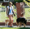 Billy Ray Cyrus spotted early on the morning of January 25th 2010 walking his dogs in Studio City 6